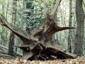39-tree-3777568_1920_gérer arbre