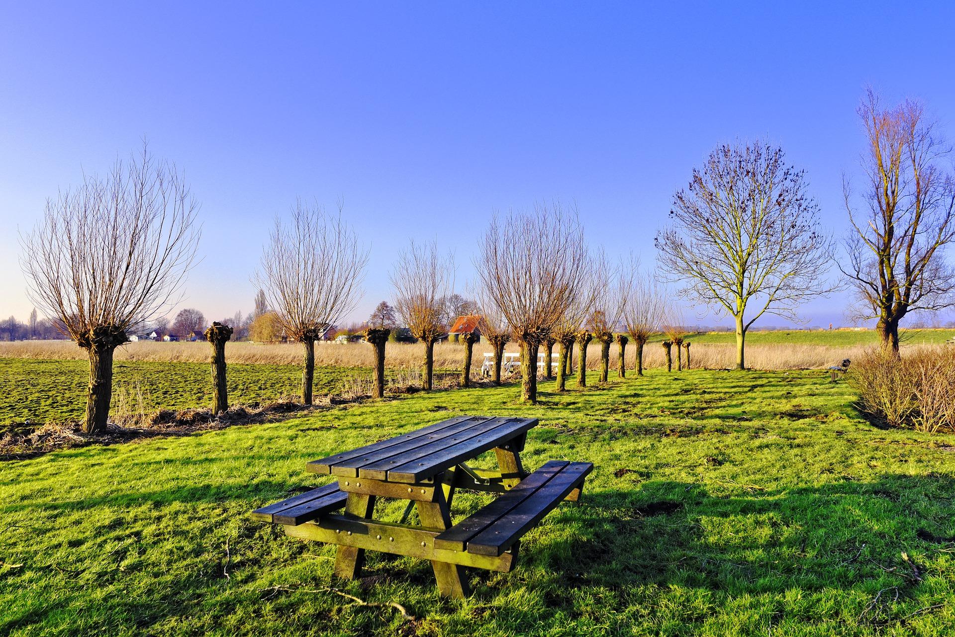 113-picnic-table-3161328_1920_arbre tetard