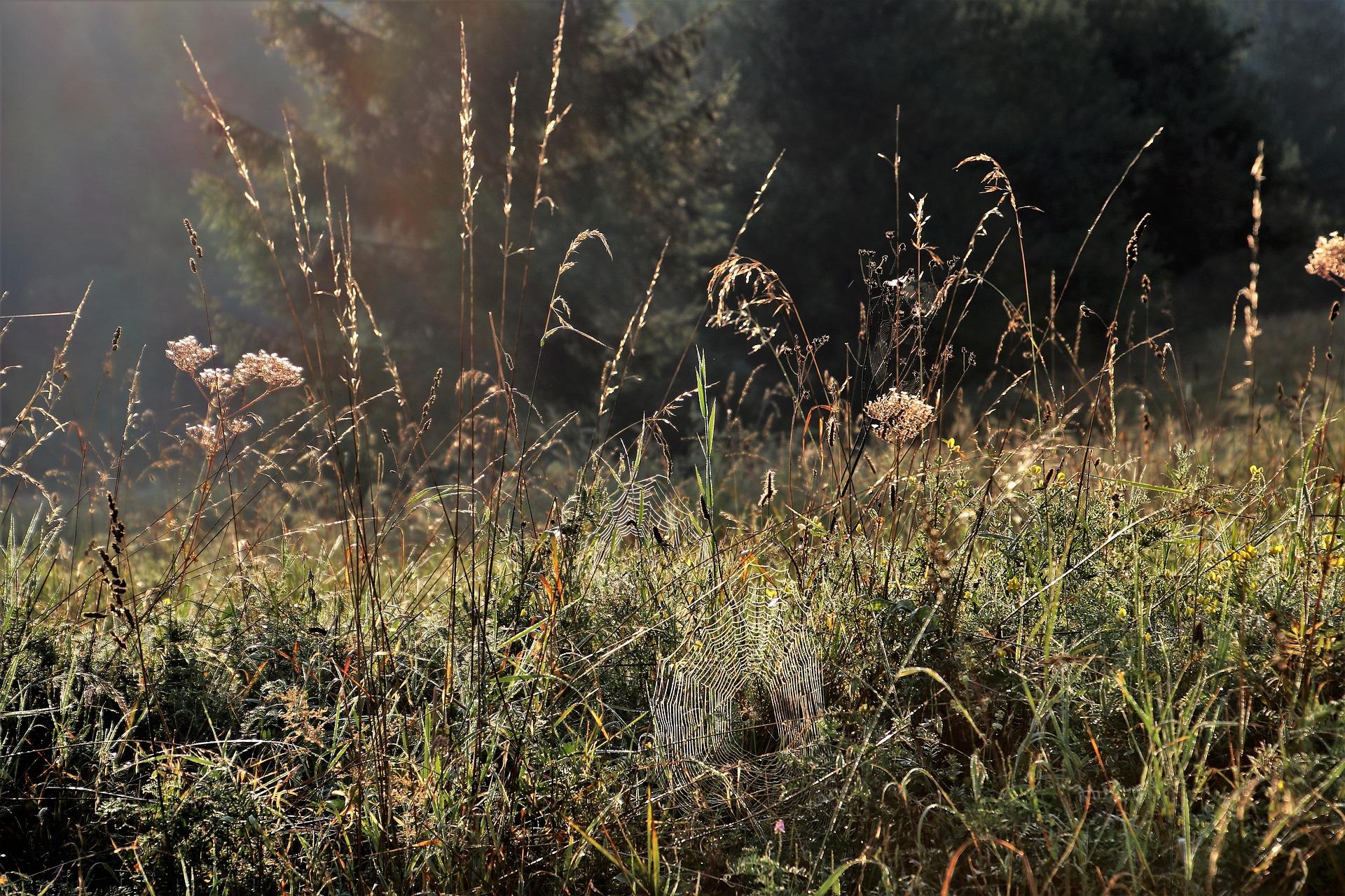 18-dry-grass-3648912_1920_friche