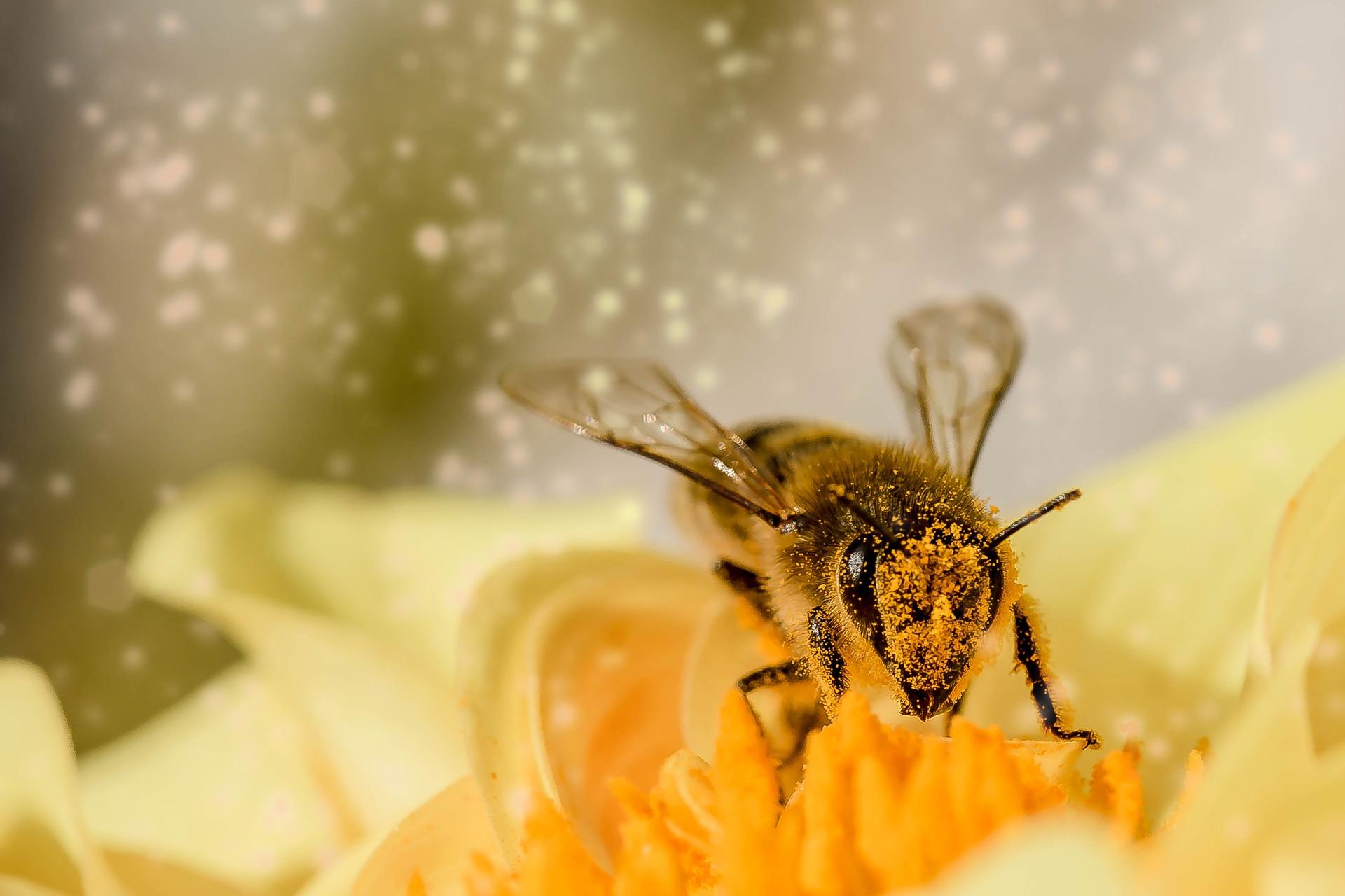 43b-bee-1726659_1920_accueil pollinisateur