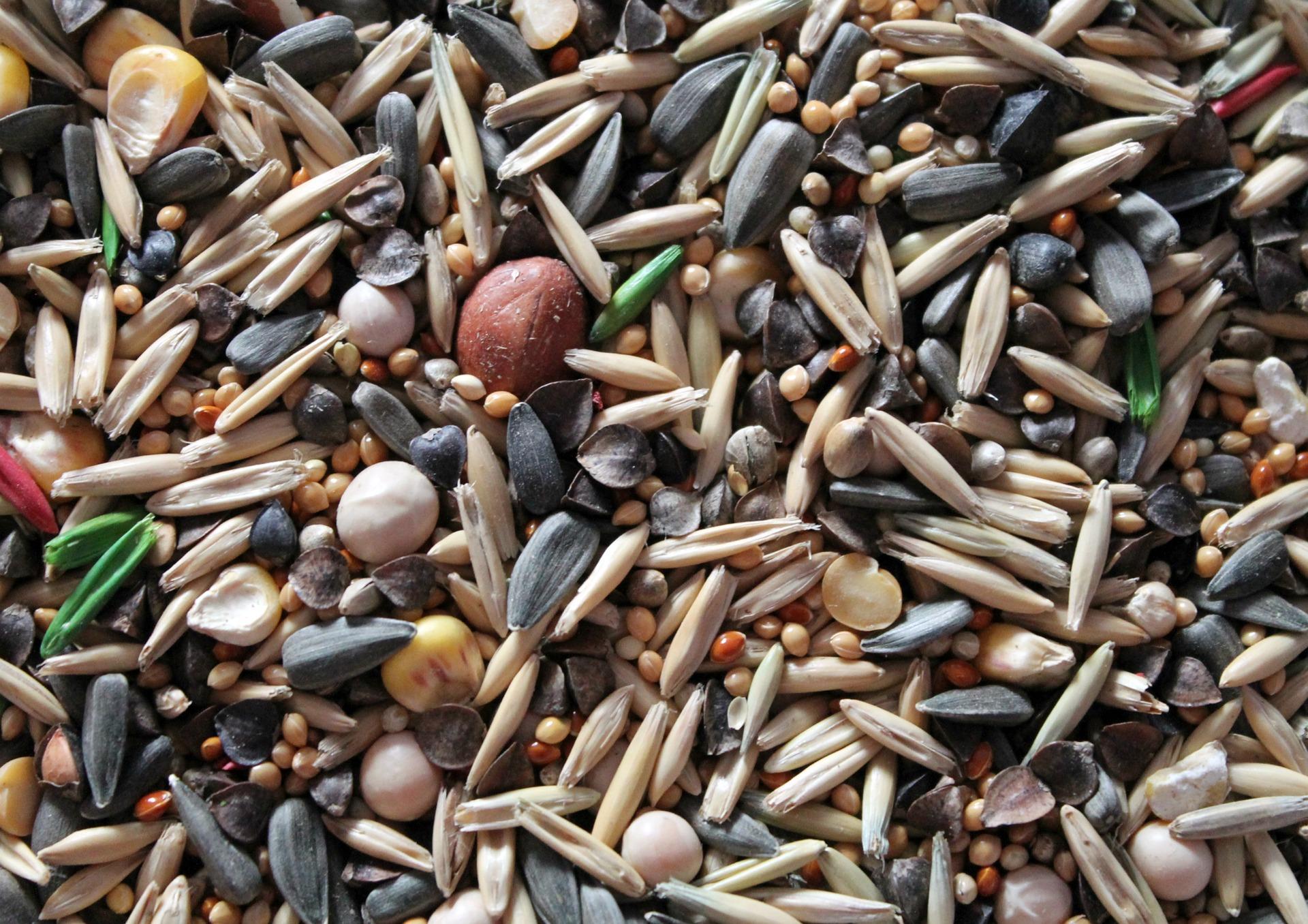 46-seeds-4054673_1920_récolter graines