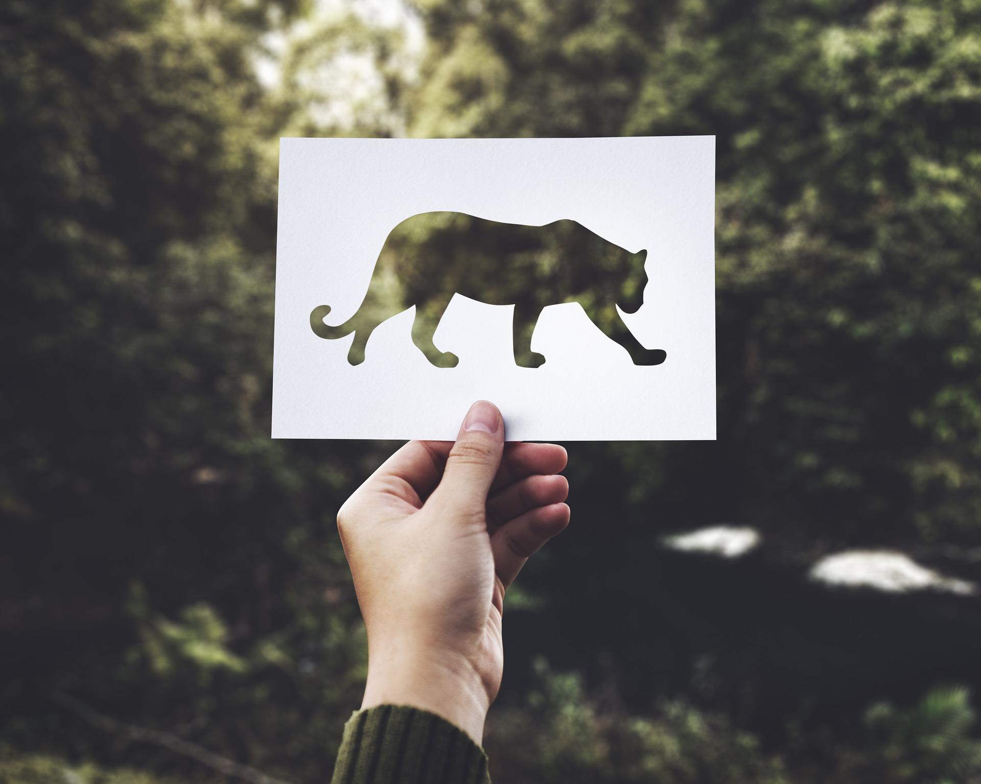 52-paper-2104833_1920_protéger espèces en voie de disparition