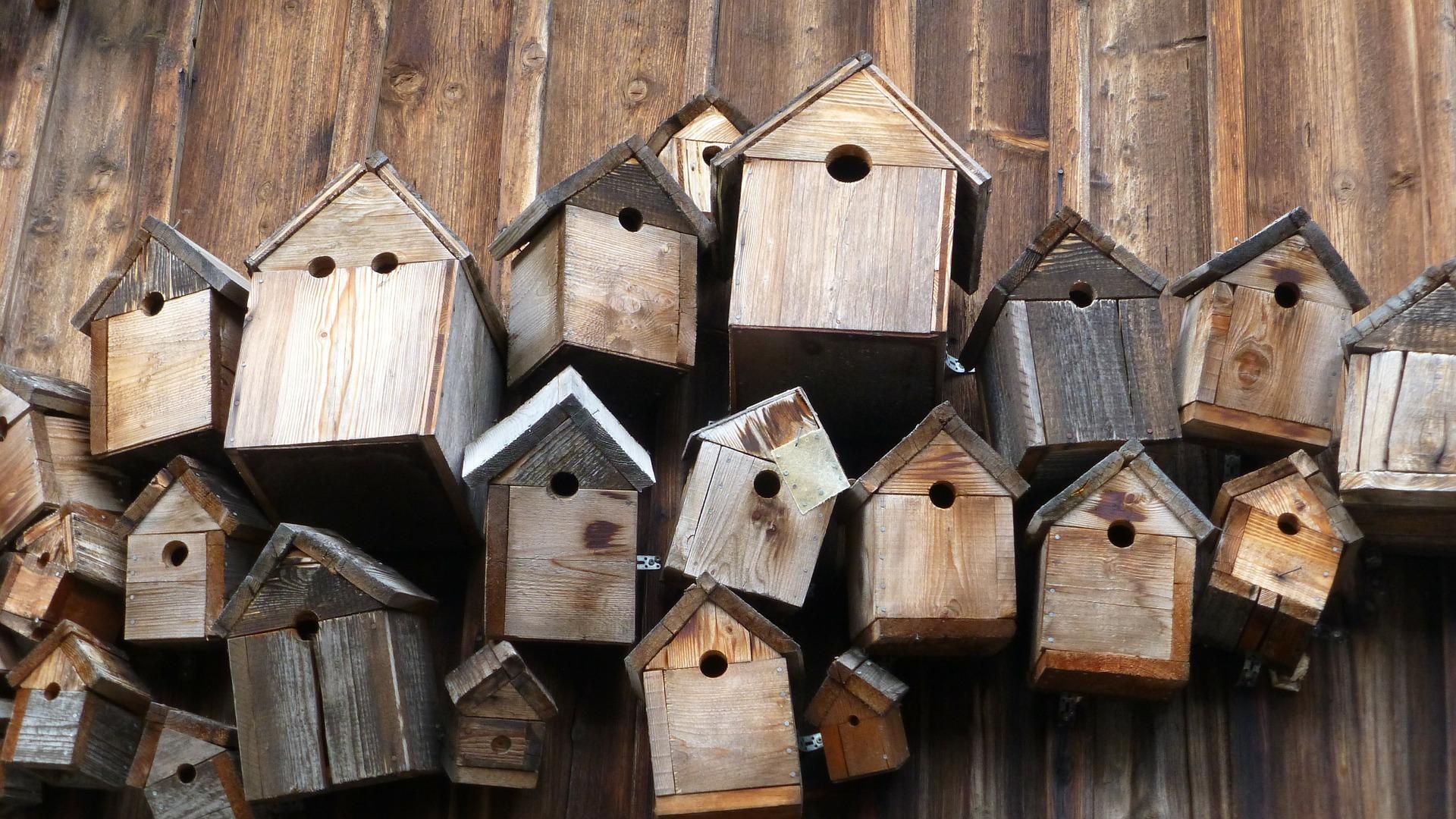 bird-feeder-248946_1920