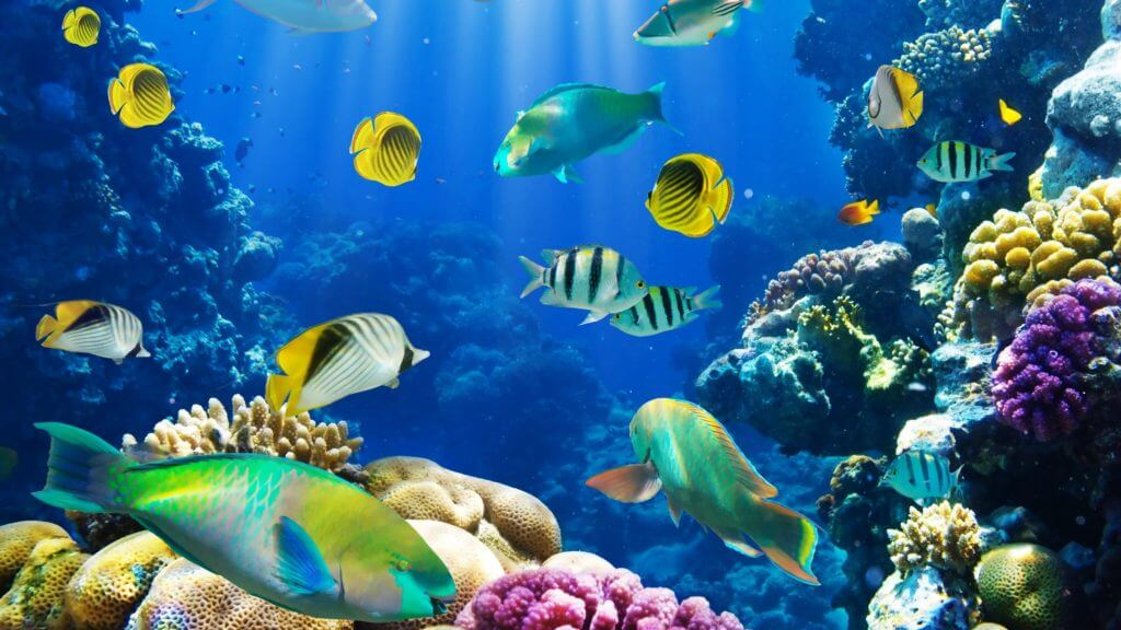 underwater_fish_fishes_tropical_ocean_sea_reef_3840x2160-1024x576